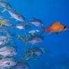 Чим відрізняються влада і лідерство в організації