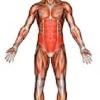 М'язи кора як запорука здорової спини