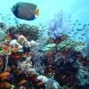 Органічний світ Атлантичного океану: особливості та опис