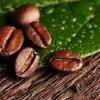 """Секрет кращого кави - """"правильні"""" кавові зерна"""