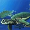 Такі кумедні морські черепахи