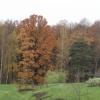 """""""Бітцевський ліс"""" - зелений оазис у великому мегаполісі"""