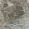 Незвичайна знахідка археологів: скелети коні-корови, шестиногого барана і жінки