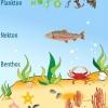 Бентос - це Планктон, нектон, бентос