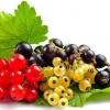 Червона і чорна смородина: калорійність, користь і шкода